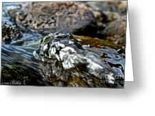 River Rock Greeting Card