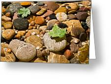River Stones Greeting Card by Steve Gadomski