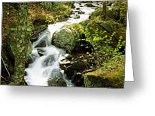 River With Trees In The Forest Greeting Card