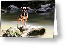 Riverdog Greeting Card