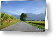 Road And Trees Greeting Card