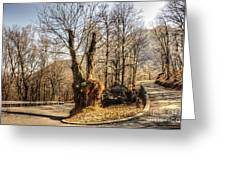 Road Curve With Trees Greeting Card