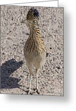Road Runner A Greeting Card