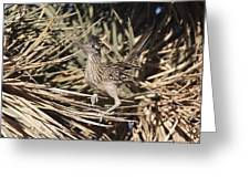 Road Runners Roost Greeting Card