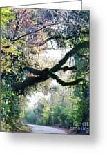 Road To Cat Island La Greeting Card