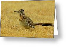 Roadrunner Hen Greeting Card