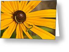 Roadside Daisy And Inch Worms Greeting Card