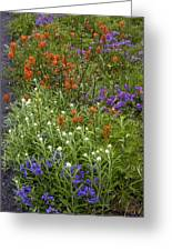 Roadside Flowers, Cascade Mountains, Usa Greeting Card
