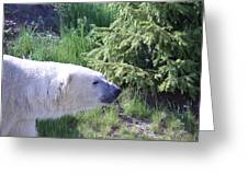 Roaming Polar Bear Greeting Card