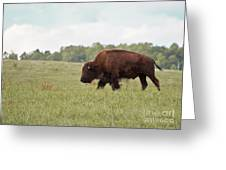 Roaming The Plains Greeting Card