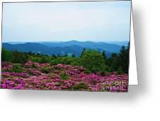 Roan Mountain Greeting Card