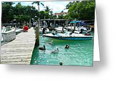 Robbies Of Islamorada Greeting Card