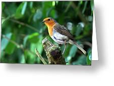 Robin 1 Greeting Card