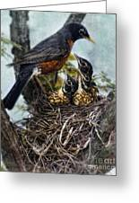 Robin And Babies In Nest Greeting Card