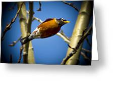 Robin Dives Into A Budding Spring Greeting Card