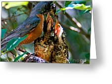 Robin Feeding Young 2 Greeting Card
