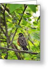 Robin In The Woods Greeting Card