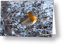 Robin On A Frosty Morning Greeting Card