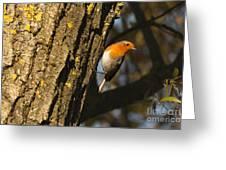 Robin On Tree Greeting Card
