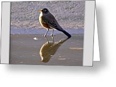 Robin Reflection Greeting Card