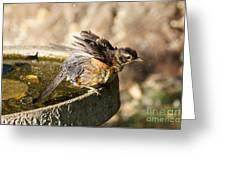 Robin Shaking Water Off Greeting Card