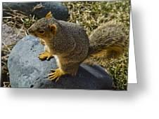 Rock Jumpin Varmint Greeting Card