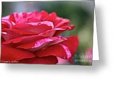 Rock N Roll Rose Greeting Card