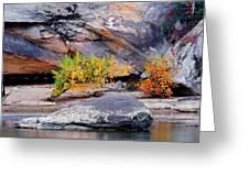 Rock Shrub And Bluff At Cumberland Falls State Park Greeting Card