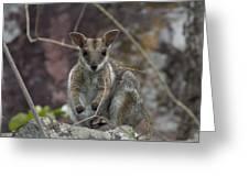Rock Wallaby V2 Greeting Card