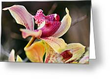 Rocking Chair Orchid Greeting Card