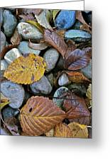 Rocks And Leaves Greeting Card