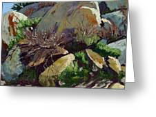 Rocks And Weeds II Greeting Card