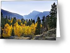Rocky Mountain Aspens Greeting Card