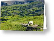 Rocky Mountain Goat Glacier National Park Greeting Card