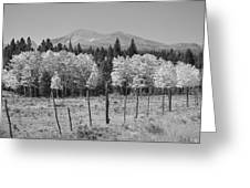 Rocky Mountain High Country Autumn Fall Foliage Scenic View Bw Greeting Card