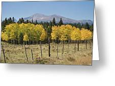 Rocky Mountain High Country Autumn Fall Foliage Scenic View Greeting Card