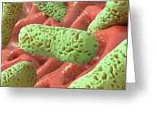 Rod-shaped Bacteria, Artwork Greeting Card