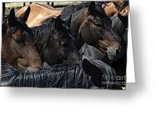 Rodeo Bucking Stock Greeting Card