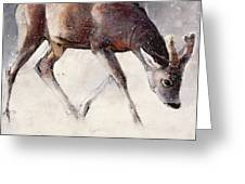 Roe Buck - Winter Greeting Card by Mark Adlington
