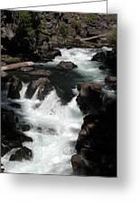 Rogue River Rapids Greeting Card