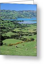 Rolling Fields With Grazing Sheep Greeting Card