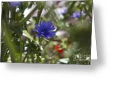 Romaine Lettuce Flower Greeting Card