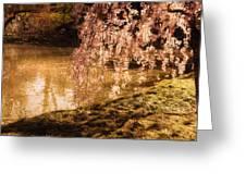 Romance - Sunlight Through Cherry Blossoms Greeting Card