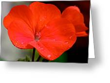 Romance In Red Greeting Card