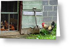 Rooster And Hens Greeting Card