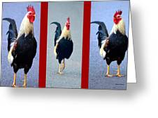 Rooster Triptych Greeting Card