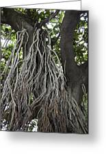 Roots From A Large Tree Inside Jallianwala Bagh Greeting Card