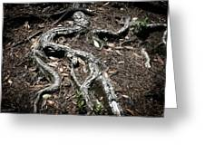 Roots Greeting Card by Shane Rees