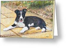 Rory Border Collie Puppy Greeting Card by Richard James Digance