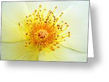 Rosa Golden Wings Greeting Card